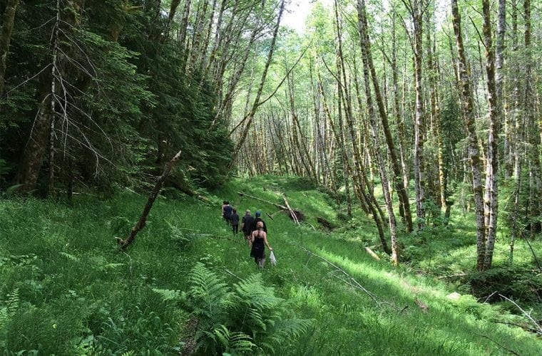 olympic national forest after rewilding WildEarth Guardians