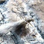 mist forestfly joe giersch wildearth guardians