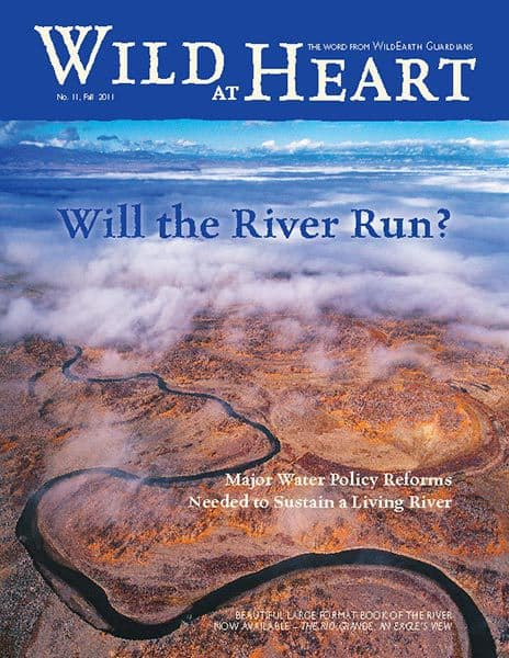 http://pdf.wildearthguardians.org/flowpaper/Newsletter-11-Fall-2011/
