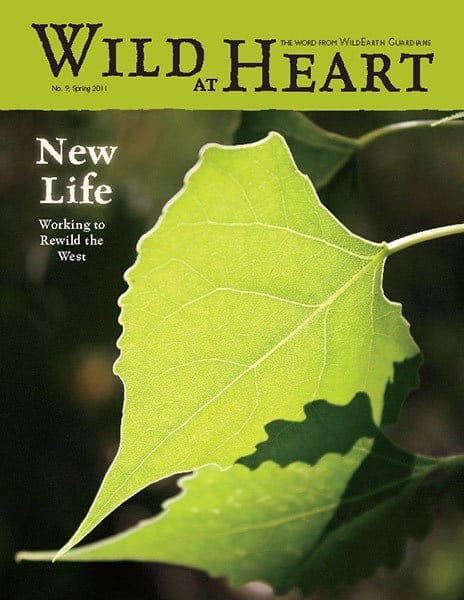 http://pdf.wildearthguardians.org/flowpaper/Newsletter-9-Spring-2011/