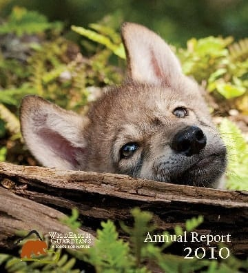 http://pdf.wildearthguardians.org/flowpaper/annual-rpt-2010/