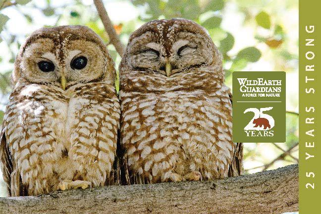 http://pdf.wildearthguardians.org/flowpaper/annual-rpt-2013/
