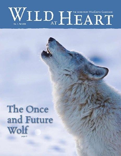 http://pdf.wildearthguardians.org/flowpaper/newsletter-01-fall-2008/