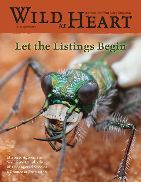 http://pdf.wildearthguardians.org/flowpaper/newsletter-10-summer-2011/
