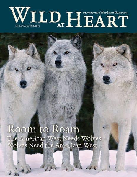 http://pdf.wildearthguardians.org/flowpaper/newsletter-14-winter-2012-2013/