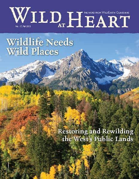 http://pdf.wildearthguardians.org/flowpaper/newsletter-17-fall-2013/