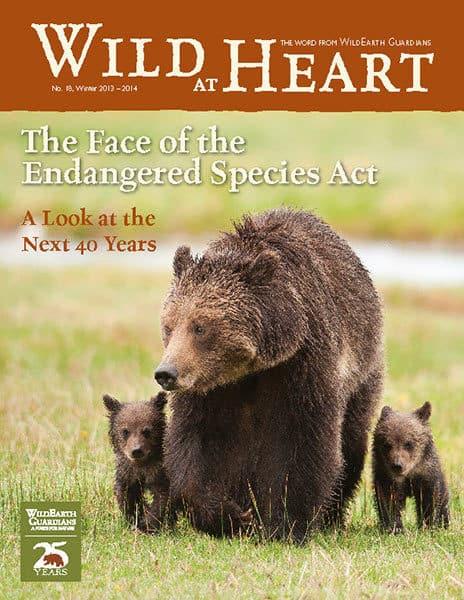 http://pdf.wildearthguardians.org/flowpaper/newsletter-18-winter-2013-2014/
