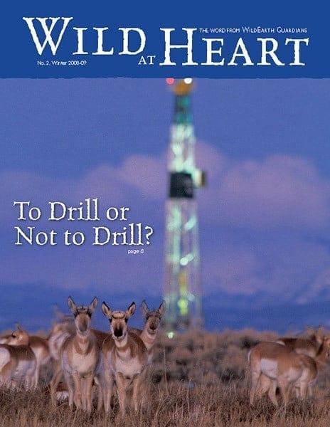 http://pdf.wildearthguardians.org/flowpaper/newsletter-2-winter-2008-2009/