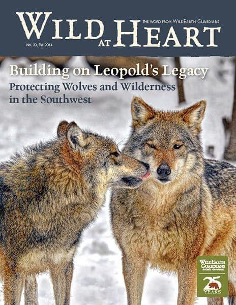 http://pdf.wildearthguardians.org/flowpaper/newsletter-20-fall-2014/