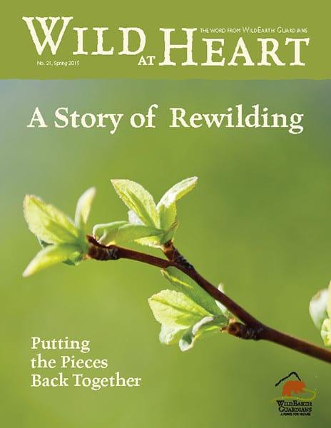 http://pdf.wildearthguardians.org/flowpaper/newsletter-21-spring-2015/