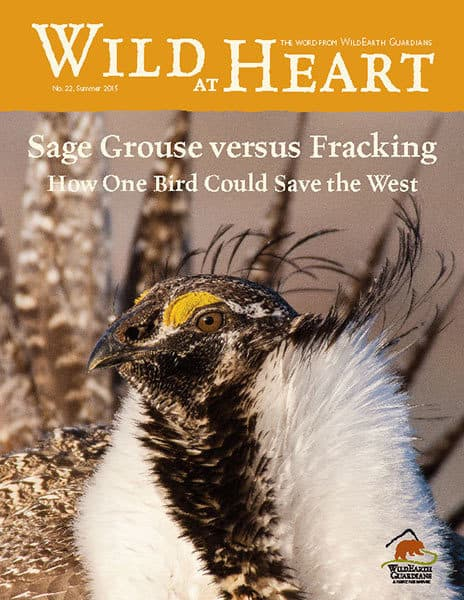 http://pdf.wildearthguardians.org/flowpaper/newsletter-22-summer-2015/