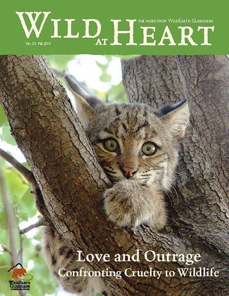 http://pdf.wildearthguardians.org/flowpaper/newsletter-23-fall-2015/