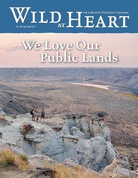 http://pdf.wildearthguardians.org/flowpaper/newsletter-28-summer-2017/