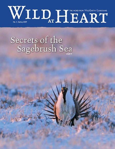 http://pdf.wildearthguardians.org/flowpaper/newsletter-3-spring-2009/