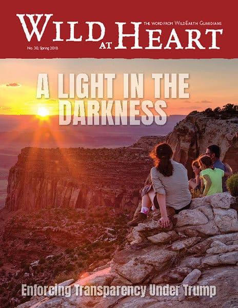 http://pdf.wildearthguardians.org/flowpaper/newsletter-30-spring-2018/