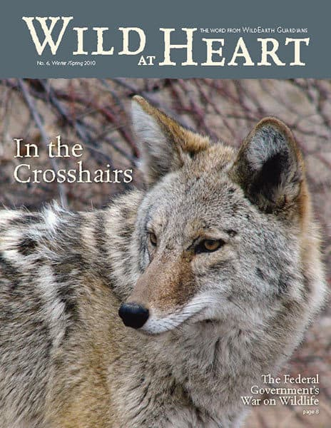 http://pdf.wildearthguardians.org/flowpaper/newsletter-06-winter-spring-2010/