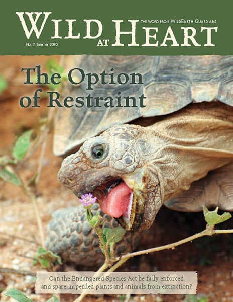 http://pdf.wildearthguardians.org/flowpaper/newsletter-07-summer-2010/