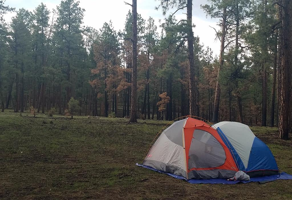 camping under ponderosas wildearth guardians
