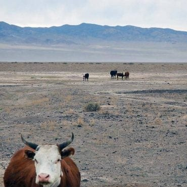overgrazing matt lavin flickr wildearth guardians