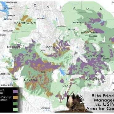 sage grouse vanishing priority habitats 2015 wildearth guardians