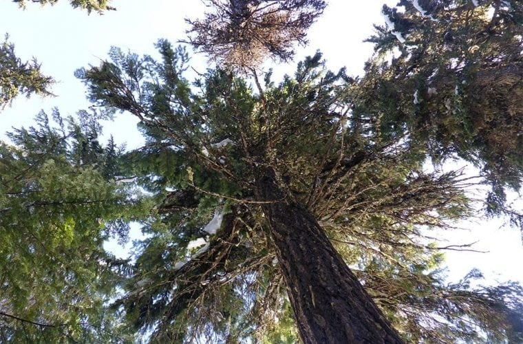 Forest Service exploits categorical exclusions to sidestep NEPA