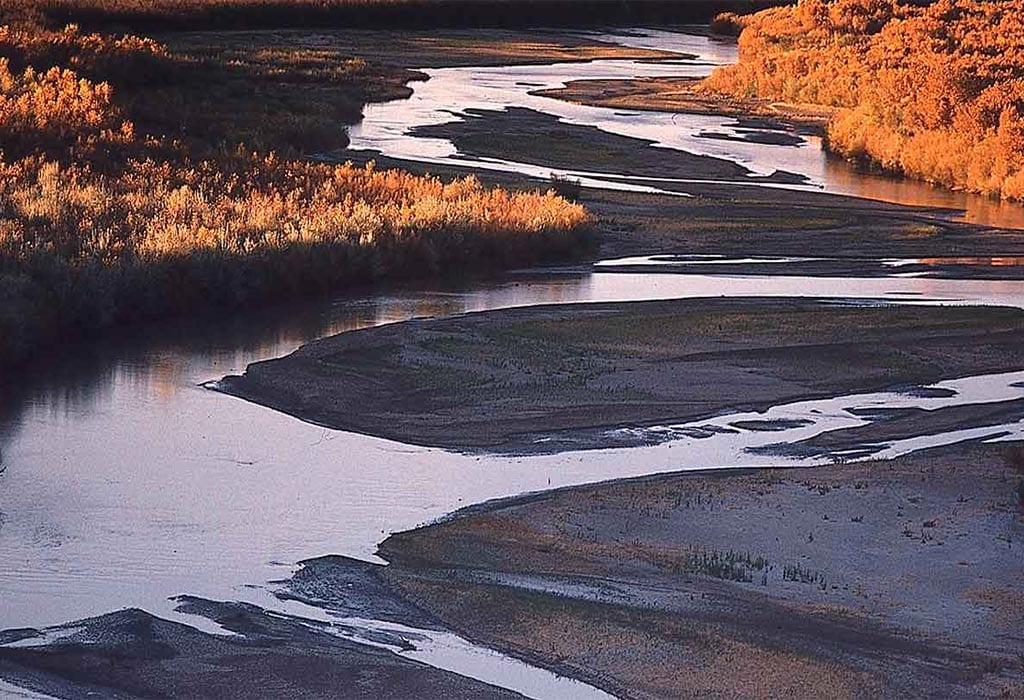 rio grande grass new mexico adriel heisey wildearth guardians