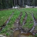 ohv damage san juan national forest steve johnson wildearth guardians