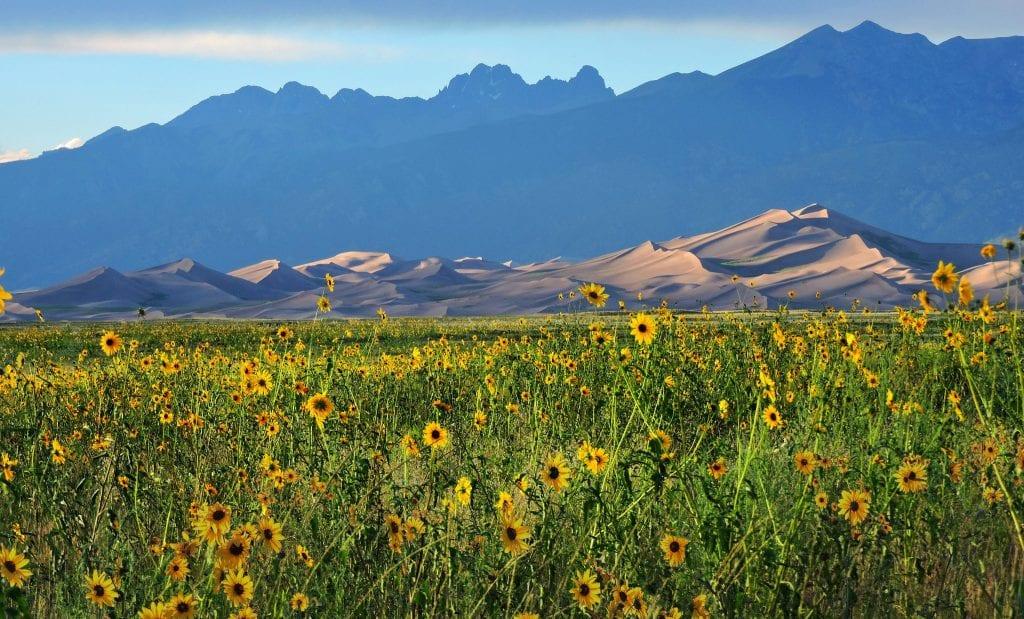 patrick myers sand dunes flowers