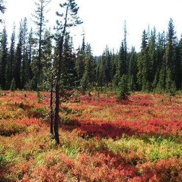 No motorized vehicles in Montana's Wilderness Study Areas