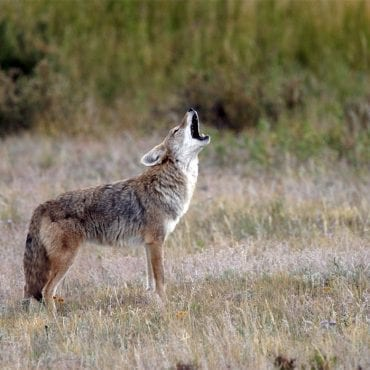 Victory! Judge rules against wildlife-killing program in Idaho