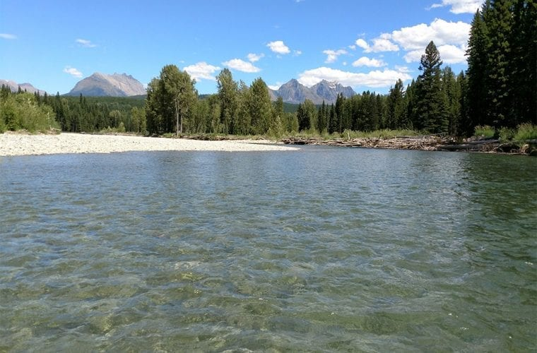 north fork flathead river usfs wildearth guardians