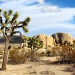 joshua tree nightowl wildearth guardians
