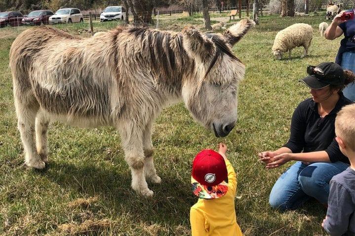 rock bottom ranch donkey wildearth guardians