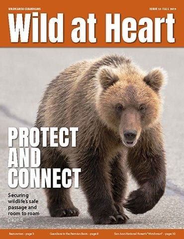 https://pdf.wildearthguardians.org/flowpaper/newsletter-35-fall-2019/
