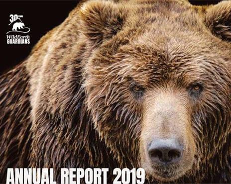 https://pdf.wildearthguardians.org/flowpaper/annual-rpt-2019/annual-rpt-2019.html