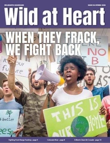 newsletter 36 spring 2020-cover