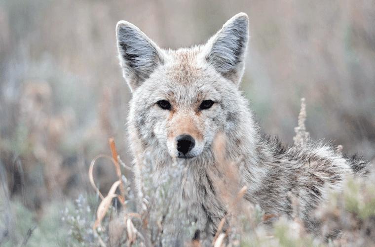 Cruel wildlife killing contests banned in Washington