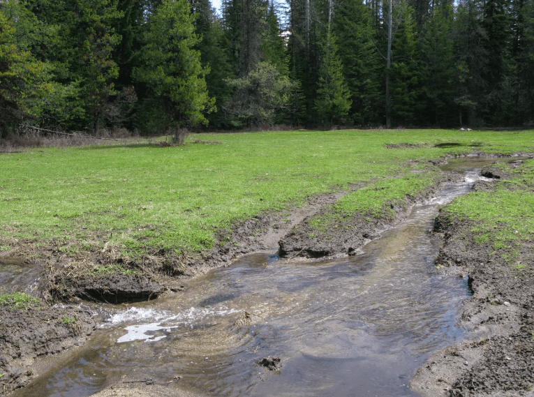 Colville-National-Forest