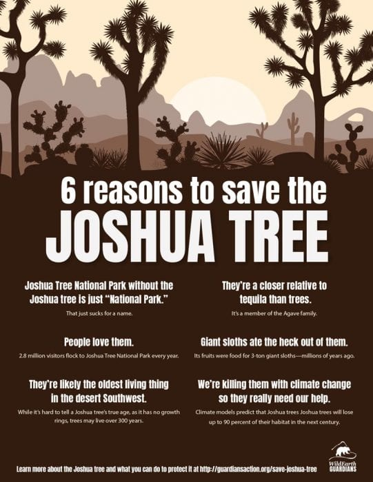 Joshua Tree Infographic WildEarth Guardians 2021