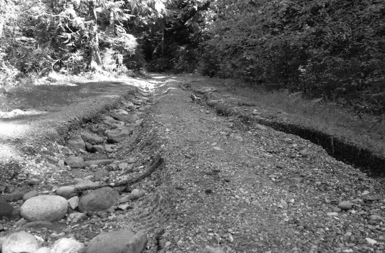 Ghost roads haunt the environment