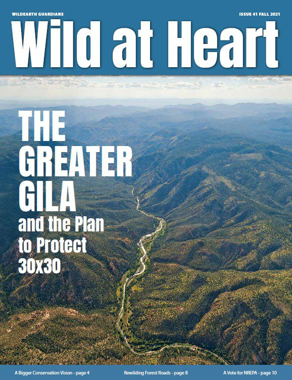 Wild at Heart #41 cover